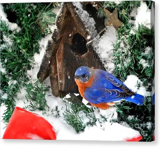 Snow Bluebird Christmas Card Canvas Print