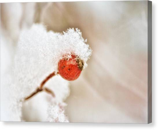 Wild Berries Canvas Print - Snow Capped by Susan Capuano