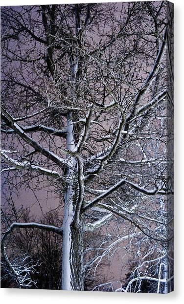 Snow Coat Canvas Print