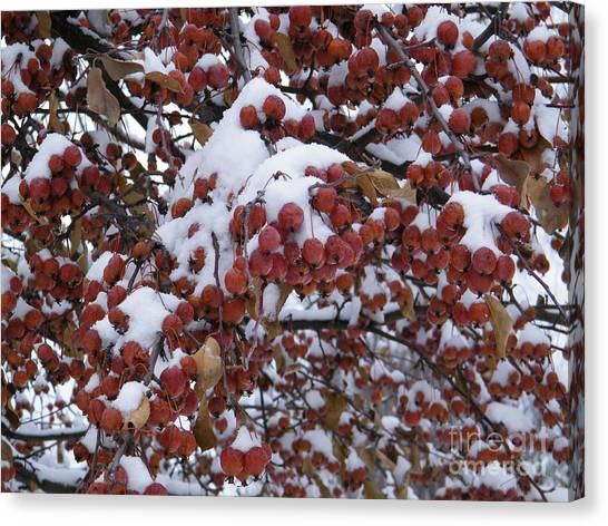 Snow Covered Berries Canvas Print