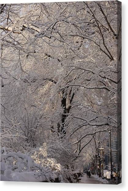 Snow Covered Trees On Central Park West Canvas Print