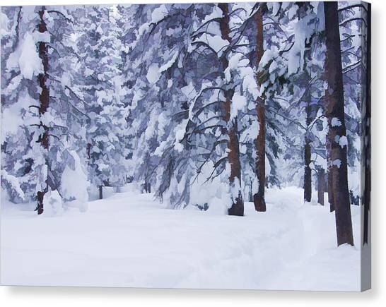 Snow-dappled Woods Canvas Print