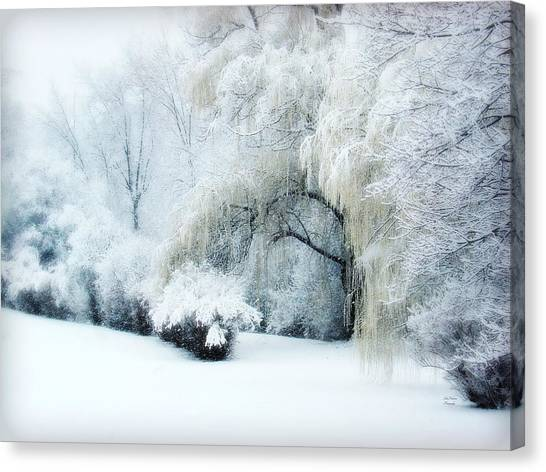 Weeping Willows Canvas Print - Snow Dream by Julie Palencia