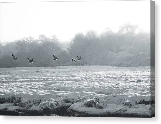 Snow And Geese Canvas Print