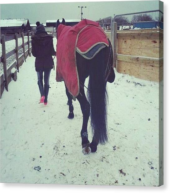 Horse Farms Canvas Print - #snow #horses #horse #farm #paddock by Jessica Sturman