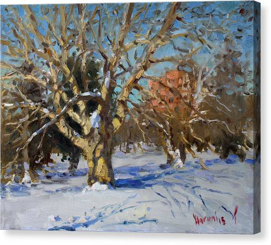 Goats Canvas Print - Snow In Goat Island Park  by Ylli Haruni