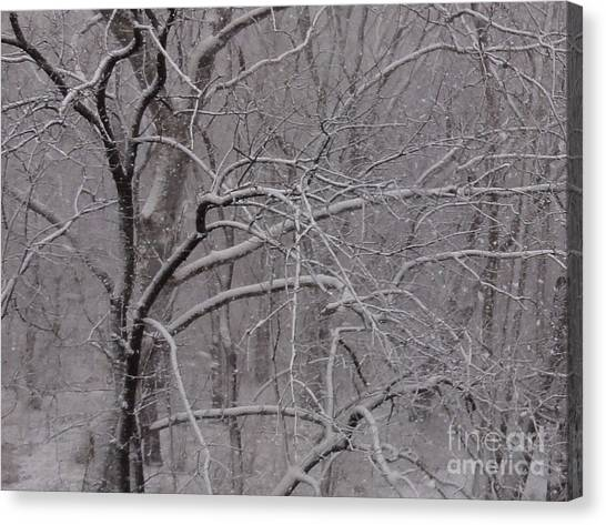 Snow In The Trees At Bulls Island Canvas Print