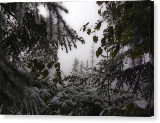 Snow In Trees At Narada Falls Canvas Print