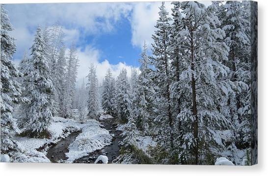 Snow In Yellowstone Canvas Print by Diane Mitchell