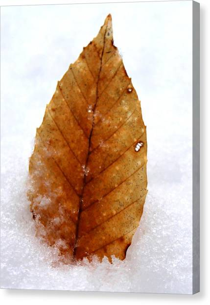 Canvas Print featuring the photograph Snow Leaf by Candice Trimble