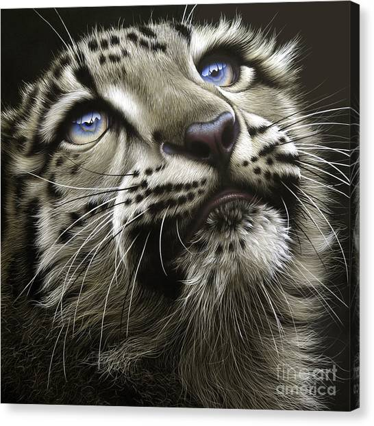 Canvas Print - Snow Leopard Cub by Jurek Zamoyski