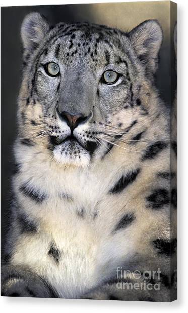 Canvas Print featuring the photograph Snow Leopard Portrait Endangered Species Wildlife Rescue by Dave Welling