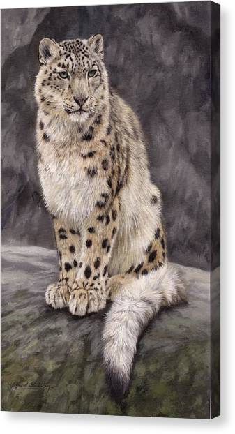 Himalayas Canvas Print - Snow Leopard Sentry by David Stribbling