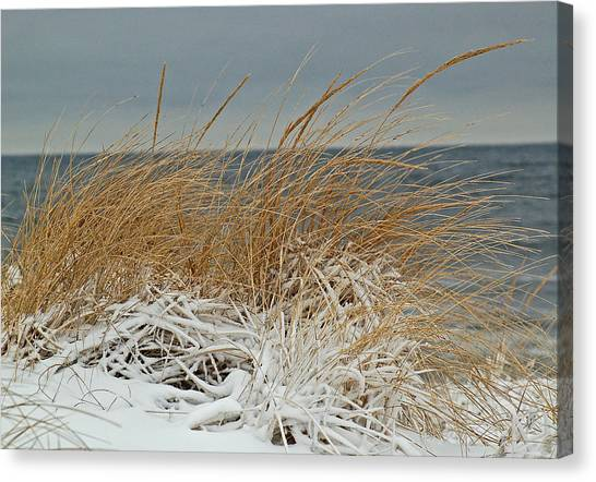 Snow On The Dunes Canvas Print by Nancy Landry