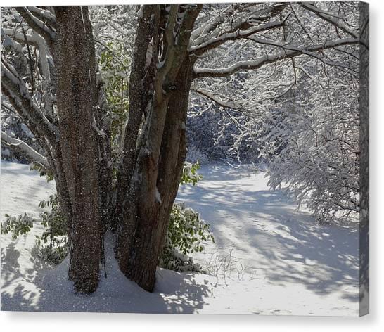 Snow Sparkles Canvas Print
