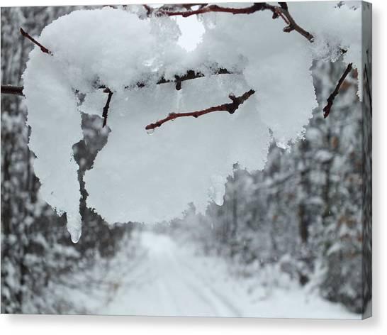 Snow Storm 4 Canvas Print by Gene Cyr