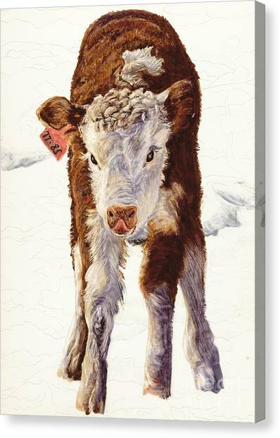 Country Life Winter Baby Calf Canvas Print