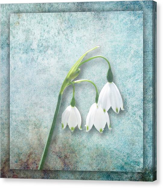 Snowdrop Canvas Print