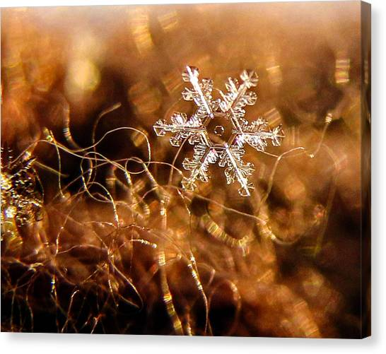 Snowflake On Brown Canvas Print