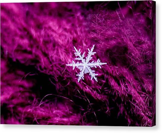 Snowflake On Magenta Canvas Print
