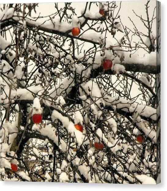 Apple Tree Canvas Print - #snowflake #snow #apple #apples #tree by Mato Mato
