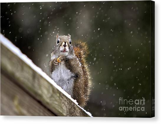 Snowflake Squirrel Canvas Print