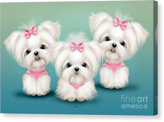 White Maltese Canvas Print - Snowflakes  by Catia Lee