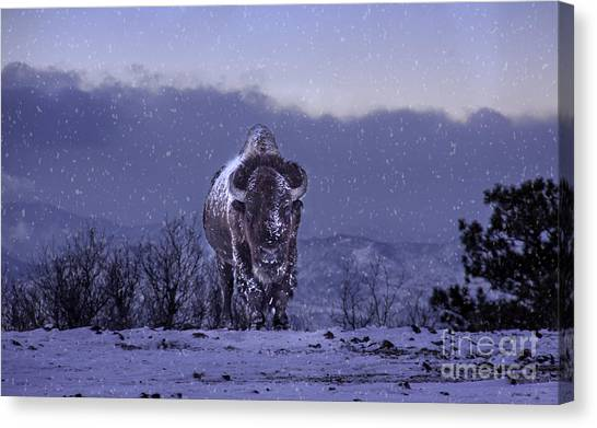 Snowflakes Falling On My Head Canvas Print