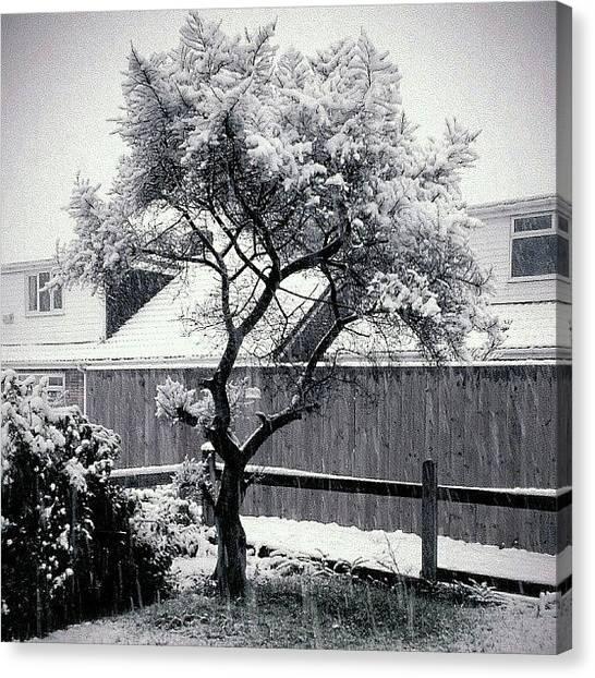 Drake Canvas Print - Snowing!! :-) by Chris Drake