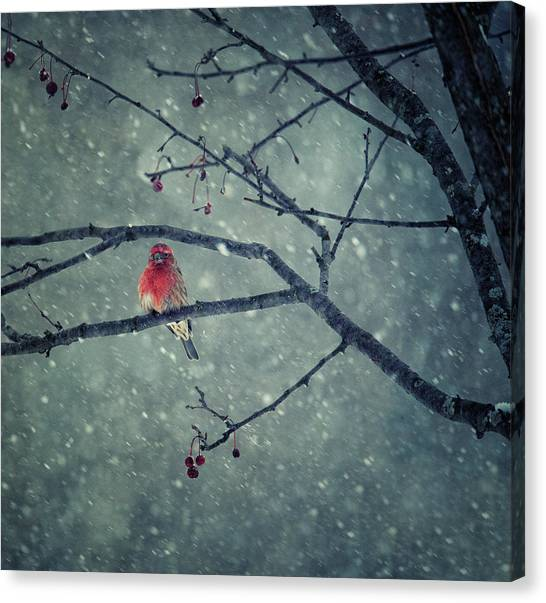Snowing Canvas Print by Yu Cheng
