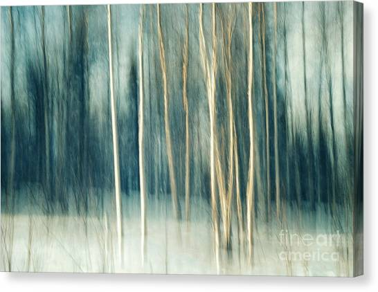 Impressionistic Canvas Print - Snowy Birch Grove by Priska Wettstein