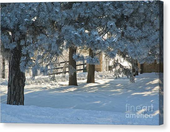 Snowy Blue Pines Canvas Print