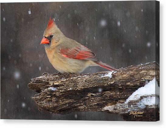Minnesota Wild Canvas Print - Snowy Cardinal by Don Anderson