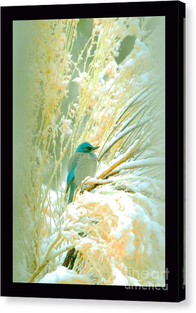 Snowy Chamisa In High Mountains Canvas Print