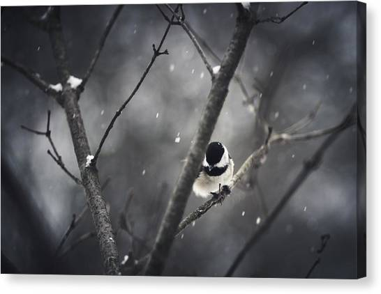 Snowy Chickadee Canvas Print