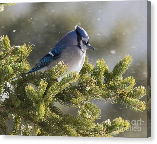 Snowy Day Blue Jay Canvas Print