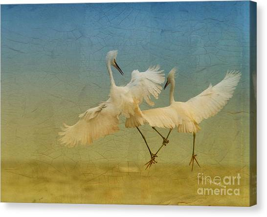 Snowy Egret Dance Canvas Print