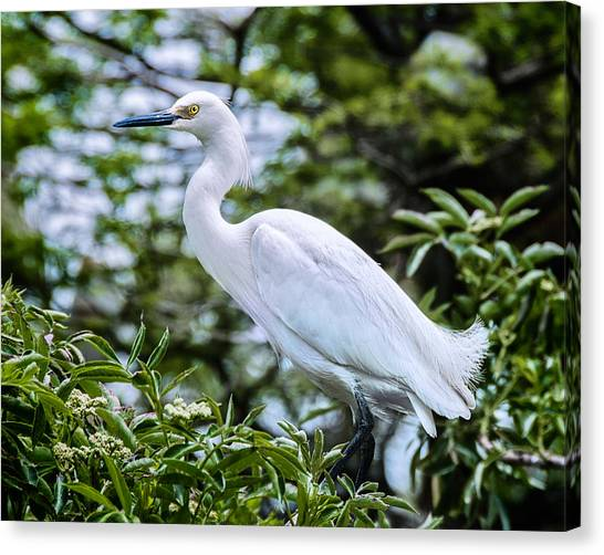 Snowy Egret In Trees Canvas Print