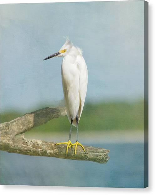 Egrets Canvas Print - Snowy Egret by Kim Hojnacki