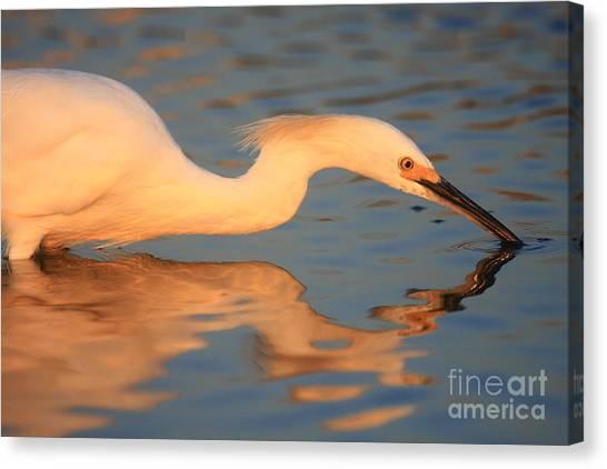 Snowy Egret Mirror Canvas Print