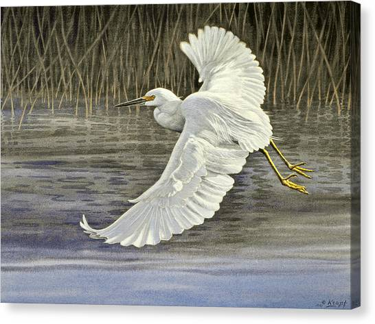 Egrets Canvas Print - Snowy Egret by Paul Krapf