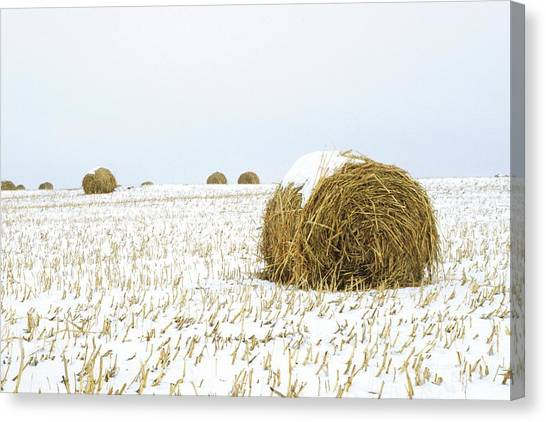 Hay Bales Canvas Print - Snowy Field by Jim Reed Photography/science Photo Library