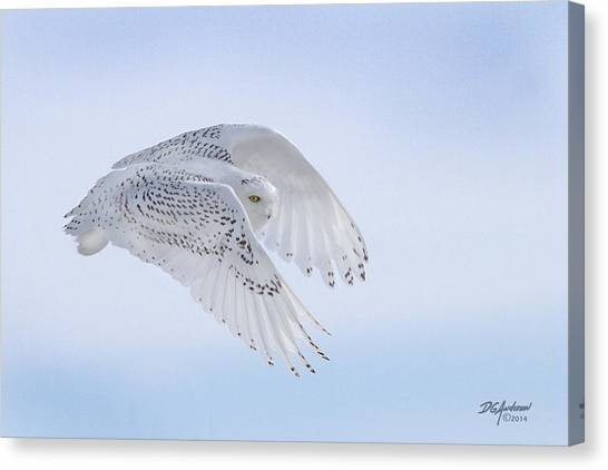 Minnesota Wild Canvas Print - Snowy Flyby by Don Anderson