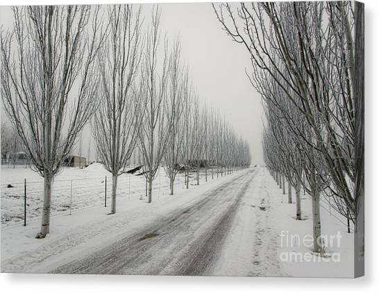 Snowy Lane Canvas Print