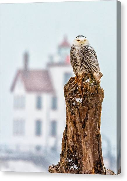 Snowy Owl At The Lighthouse Canvas Print