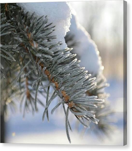Michigan Canvas Print - Snowy Pine Tree by Alexa V