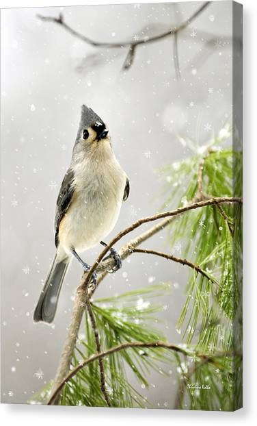 Titmice Canvas Print - Snowy Songbird by Christina Rollo