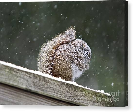 Snowy Squirrel Canvas Print