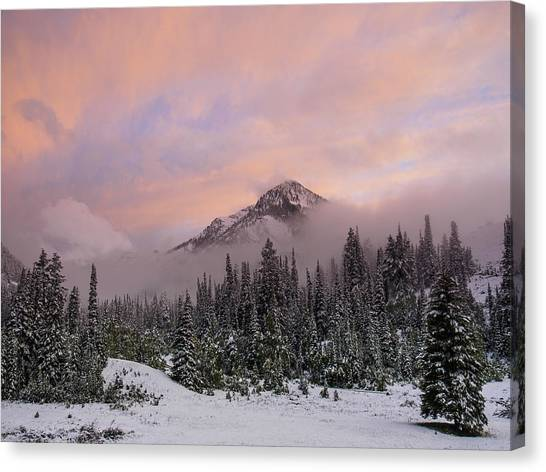 Snowy Surprise Canvas Print