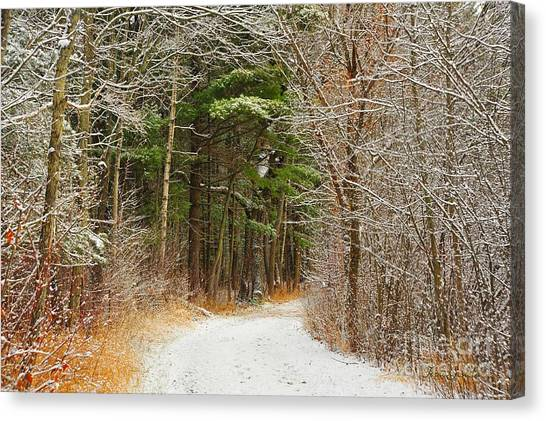 Snowy Tunnel Of Trees Canvas Print